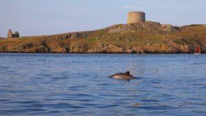 Dolphins in Dublin Bay
